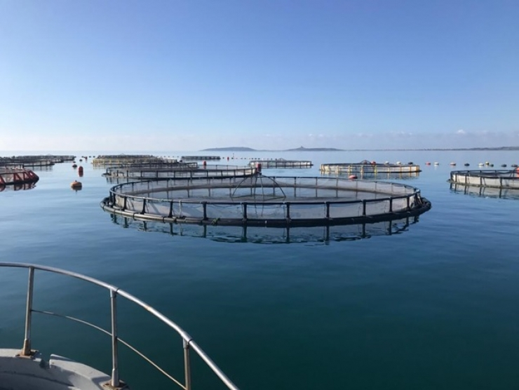 Alimentazione sana, sicura e sostenibile: Il futuro del cibo prodotto dal mare e dalle acque interne