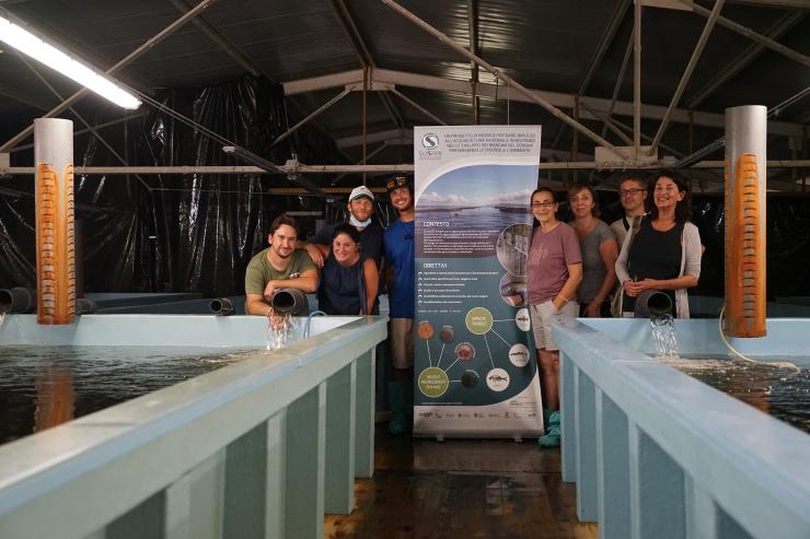 SUSHIN - completate le prove di alimentazione con diete innovative nelle aziende di acquacoltura