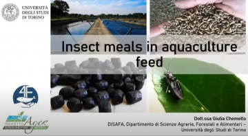 Insect meal in aquaculture