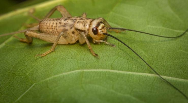 Metodi molecolari per tracciare gli insetti nei mangimi e negli alimenti: una pubblicazione di SUSHIN su European Food Research and Technology