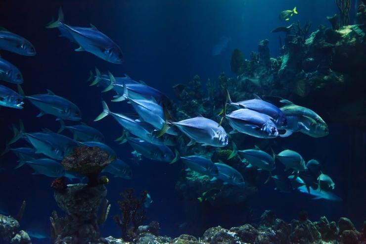 La valutazione dell'impatto ambientale in acquacoltura