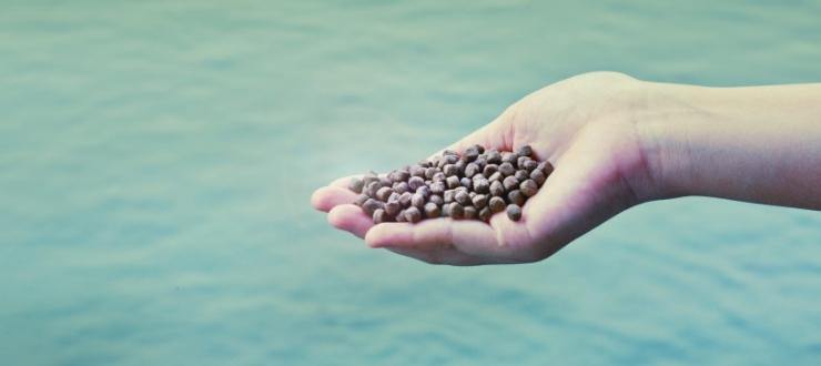 La sostituzione della farina di pesce e gli aminoacidi solforati nei mangimi per pesci carnivori: La Taurina