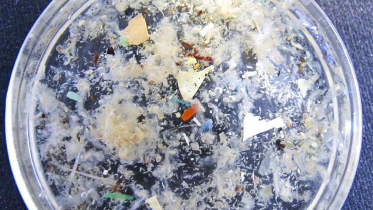 Le plastiche nei prodotti dell'acquacoltura intensiva: un problema controllabile?