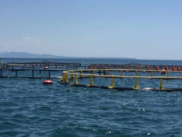 Pesca sostenibile: l'acquacoltura è l'unica soluzione possibile
