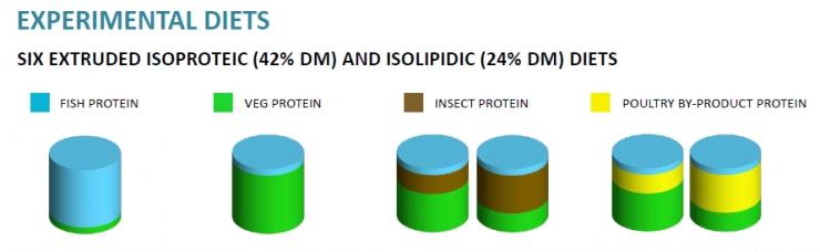 I risultati del primo esperimento di SUSHIN ad Aquaculture Europe 2019: le farine di insetto e di origine avicola, due fonti alternative e sostenibili per i mangimi di trota
