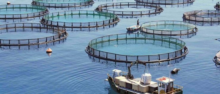 Quanta risorsa energetica consuma l'acquacoltura?